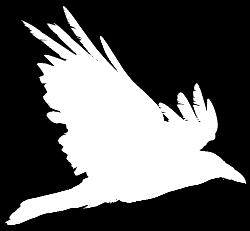 Corvus Forensics